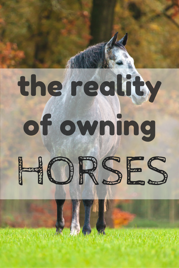 guide to owning a horse