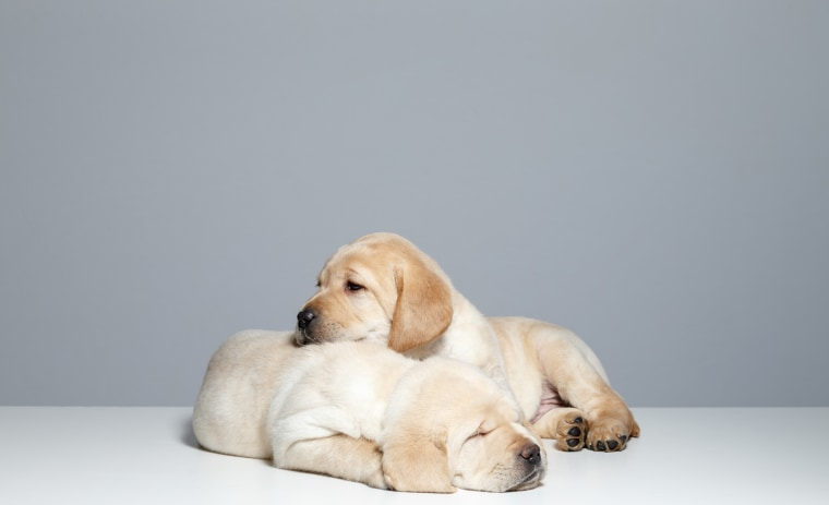 how to become a guide dog mobility instructor
