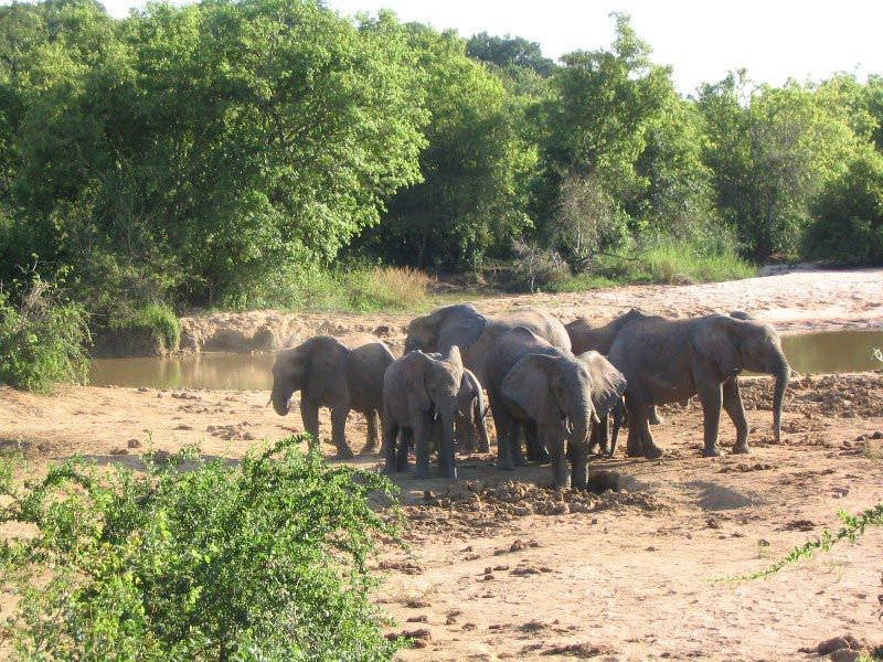 a guide to the yankari game reserve